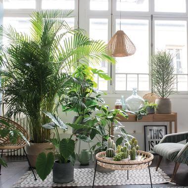 Bien choisir ses plantes dintérieur quand on na pas la main verte