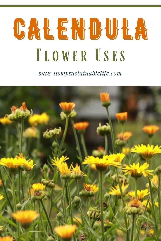 Calendula Flower Uses in 2020 Calendula flower, Preserve