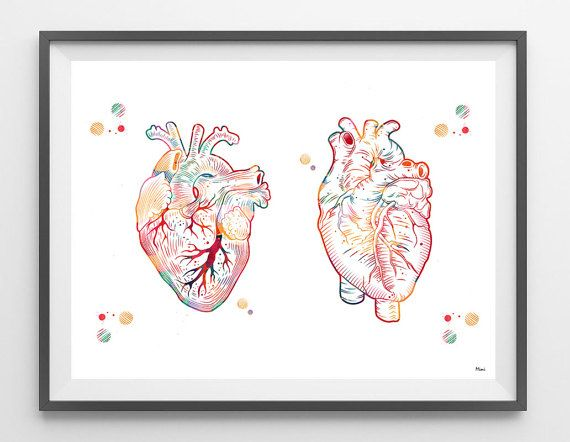 Human heart watercolor print medical art heart poster anterior and human heart watercolor print medical art heart poster anterior and posterior view of the heart ccuart Choice Image
