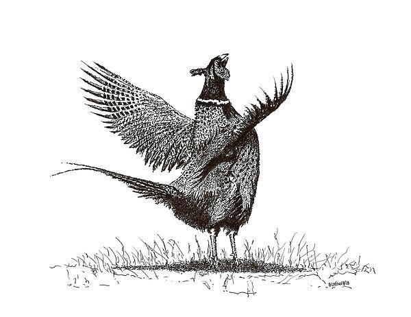 Pheasant, black and wh...