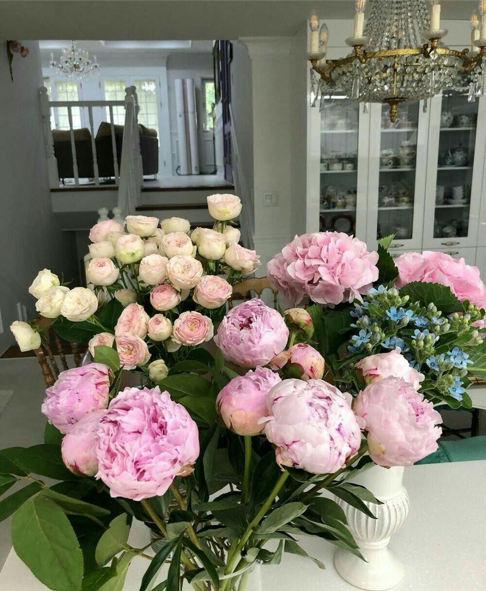 Flowers In 2020 Piones Flowers Flowers Pretty Flowers