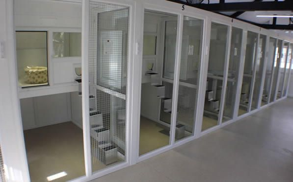 Ivywood Boarding Cattery Cat Hotel Cat Kennel Cattery