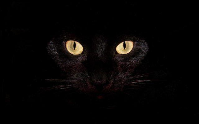 Top 10 Reasons To Adopt A Black Cat Cat Background Black Cat Eyes Cats Black cat wallpaper full hd