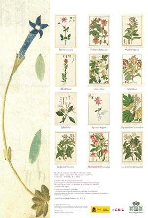 Doce de los dibujos botánicos realizados durante la  Expedición Marítima de Malaspina y Bustamante (1789-1794) son los protagonistas del calendario que el Real Jardín Botánico de Madrid publicó para el año 2012.