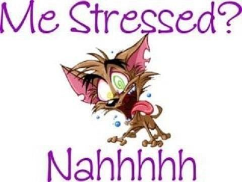 Stressed Stress Funny Work Quotes Funny Funny Quotes About Life