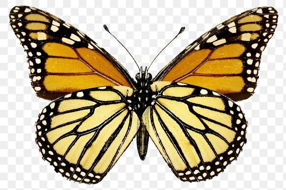 Download Premium Png Of Vintage Monarch Butterfly Illustration Design Butterfly Illustration Monarch Butterfly Butterfly Clip Art