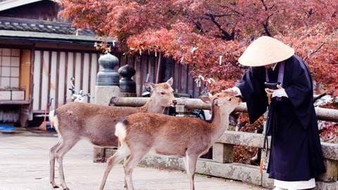 buddhist monk and two deer  buddhist wisdom animal reiki