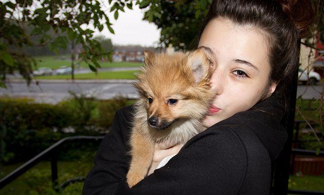 Boo the Pomeranian.    Like, repin, share! :)