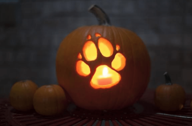 14 Amazing And Fun Animal Pumpkin Carving Ideas To Inspire You #pumkincarvingdesigns