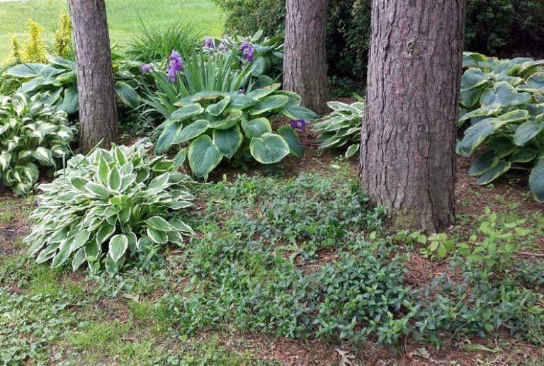 Pin on Garden Ideas Cottage