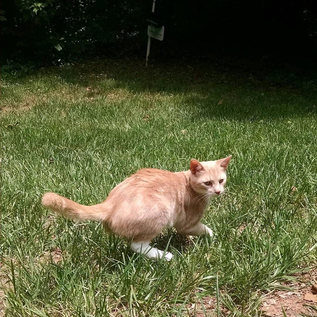 Someone Had Fun Outside He Had A Leash And Harness But Managed To Escape It In Record Time But He Was Fully Supervised W In 2020 Tiny Kitten Cat S Cats