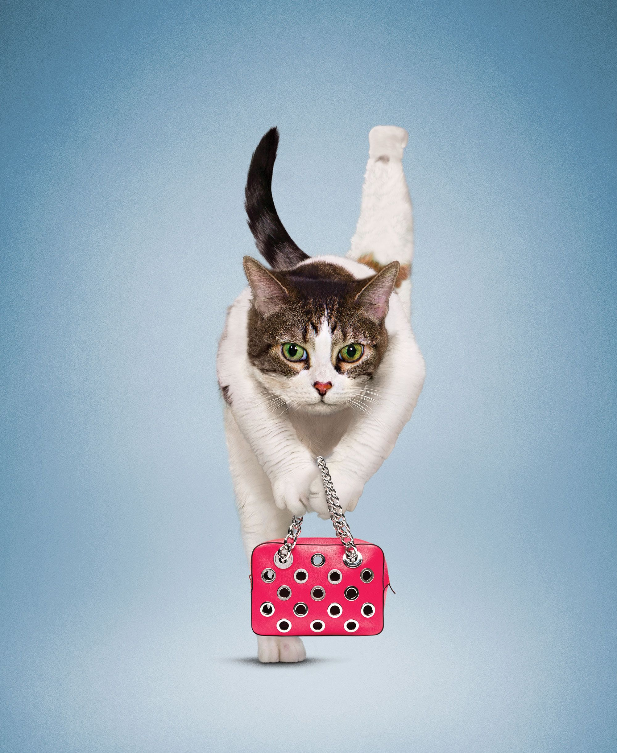 See Cats And Dogs Doing New Year S Yoga Dog Cat Kittens