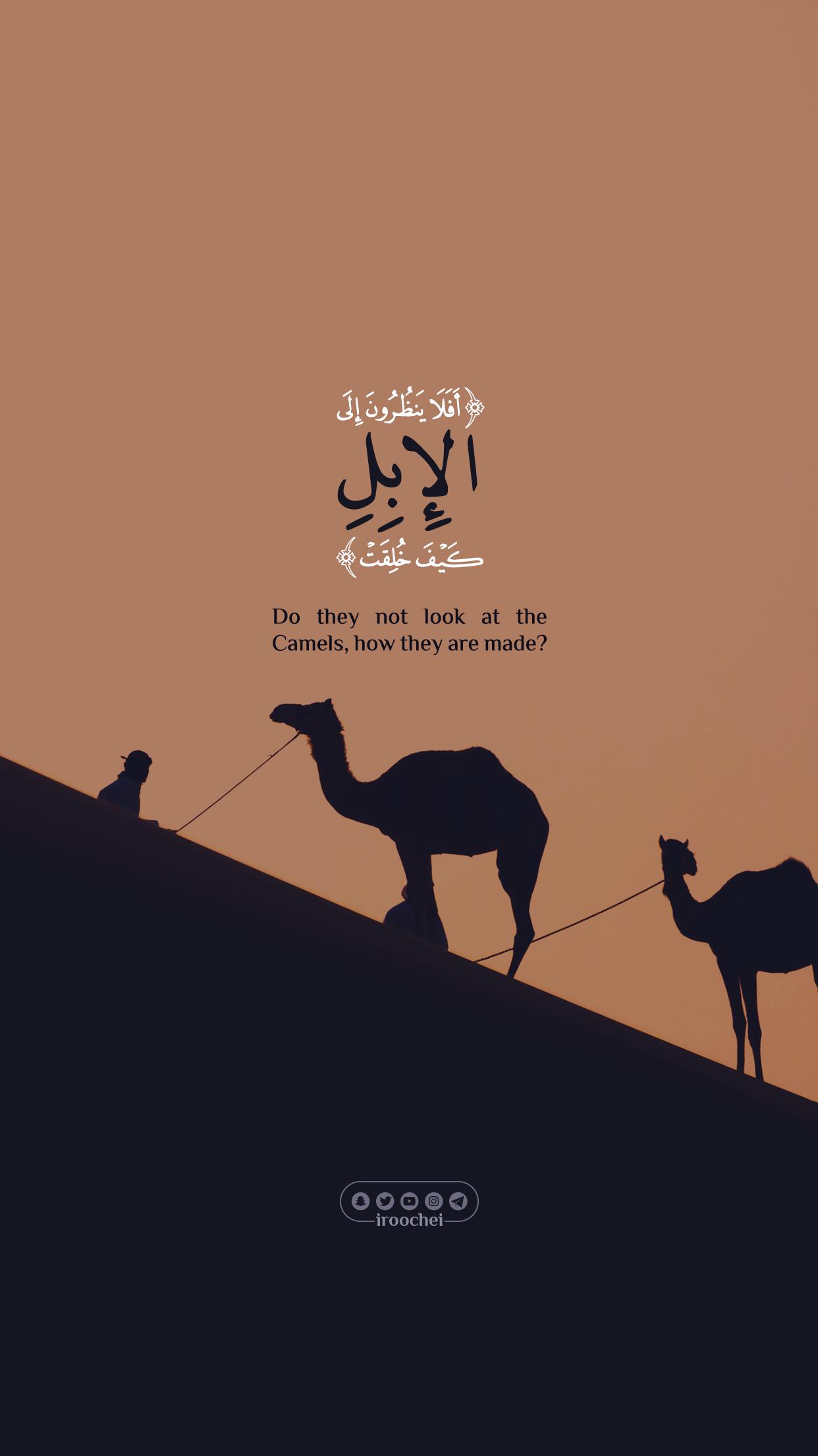 أفلا ينظرون إلى الإبل كيف خلقت Quran Quotes Love Quran Quotes Inspirational Beautiful Quran Quotes