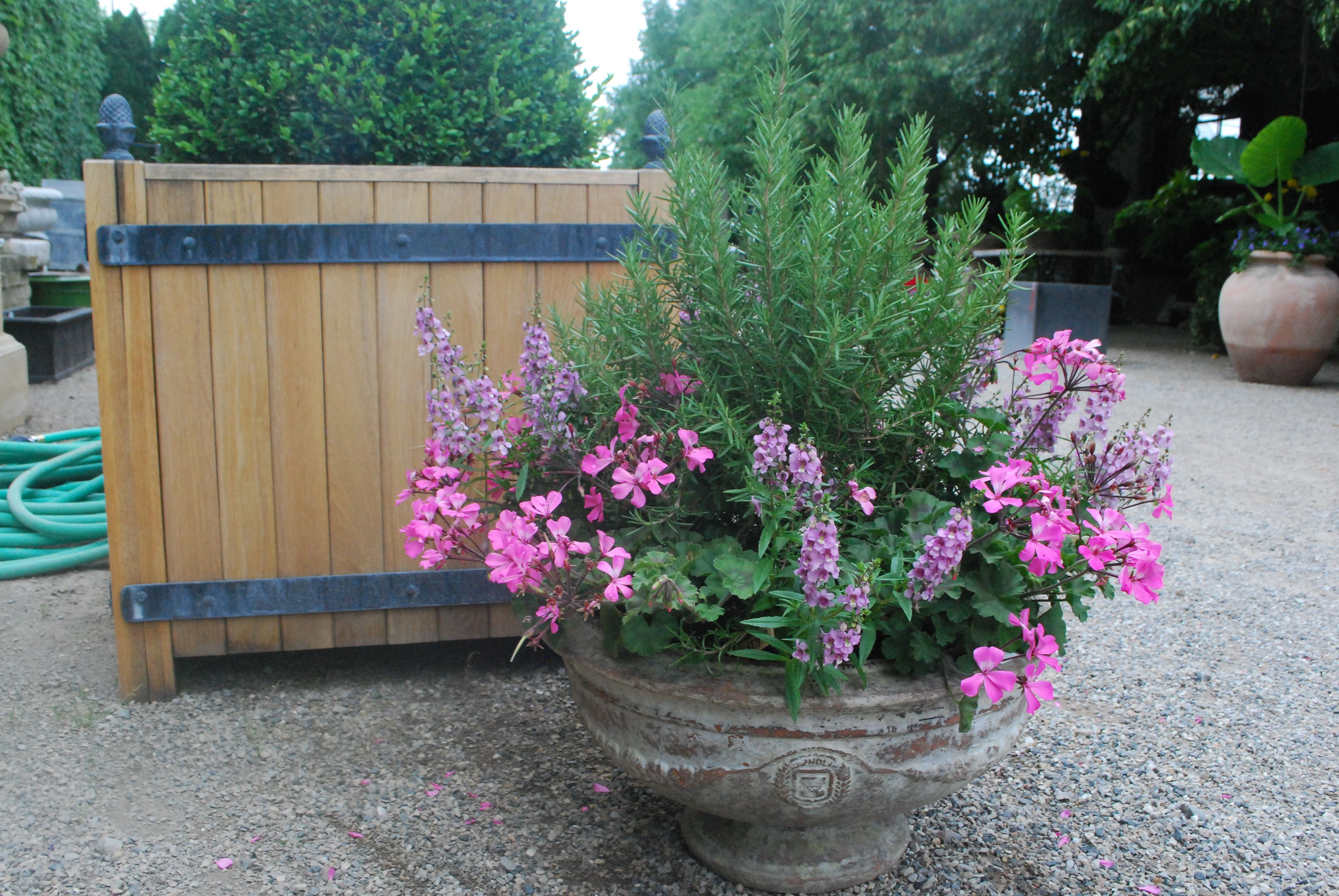 rosemary, pink angelonia and pink Caliente geraniums