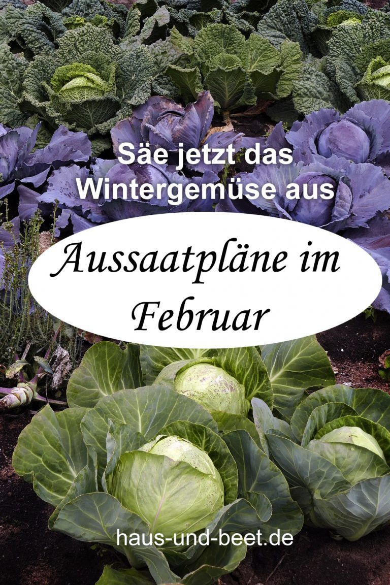 Aussaatplane Im Februar Bald Geht Es Richtig Los Garten