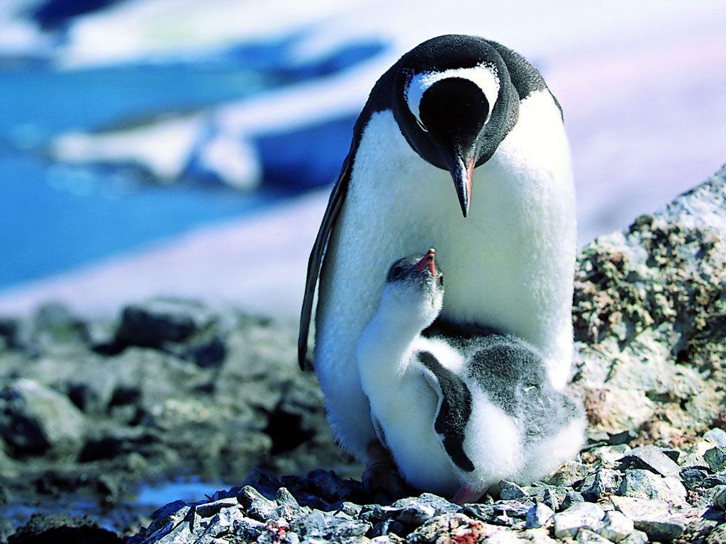 Lovely 80 best Baby Animals & Their Mothers images on Pinterest | Animal  AV28