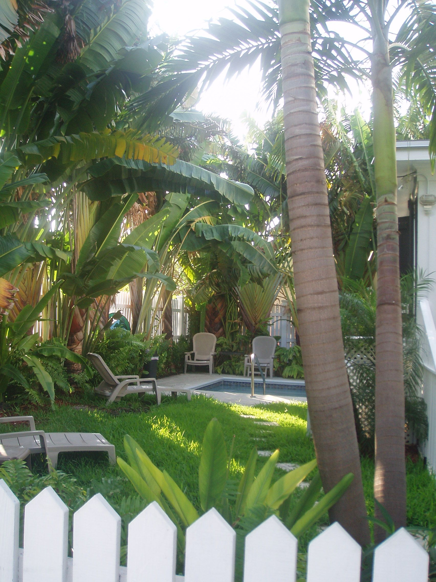 Palm Tree Pool Landscaping