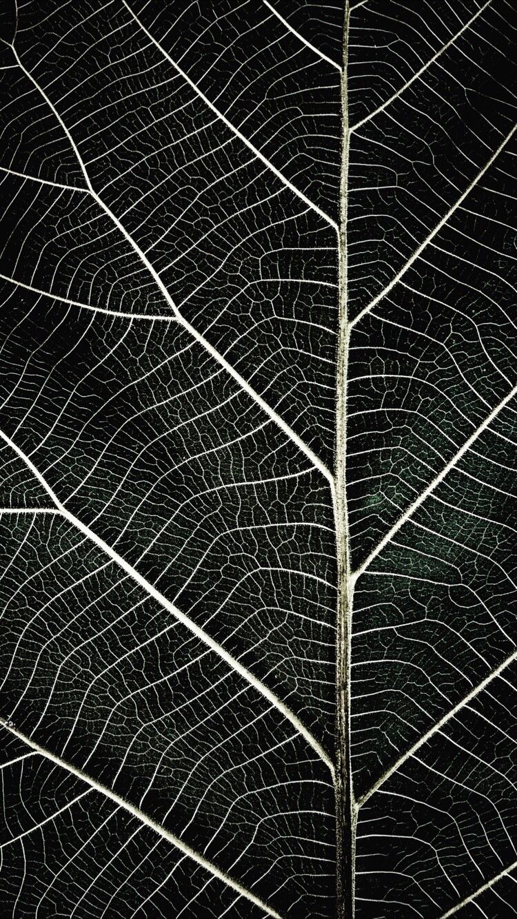 Dark Macro Wallpaper Wallpaper Plant Wallpaper Cool Wallpaper