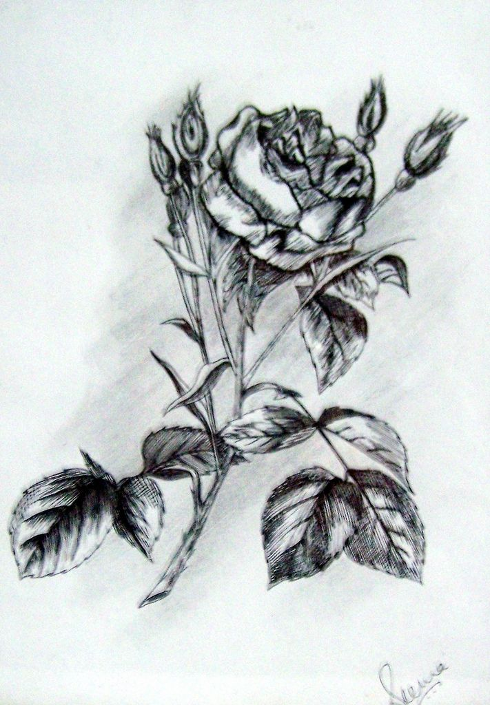 This is a sketch of a rose flower alongwith the leaves. It has been made with the help of black gel pen. Don't miss out the excellent shading by the artist.