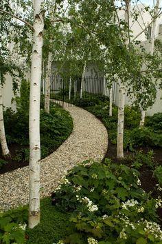 Image result for birch trees in japanese gardens | Birch ...