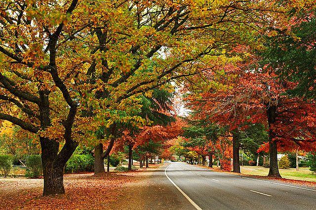 Bright Victoria Australia Delany Avenue Autumn Img 9825 Bright Australia Travel Australia Scenery
