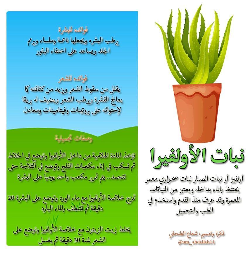 انفوجرافيك فوائد نبات الأولفيرا Agriculture Plants Herbs