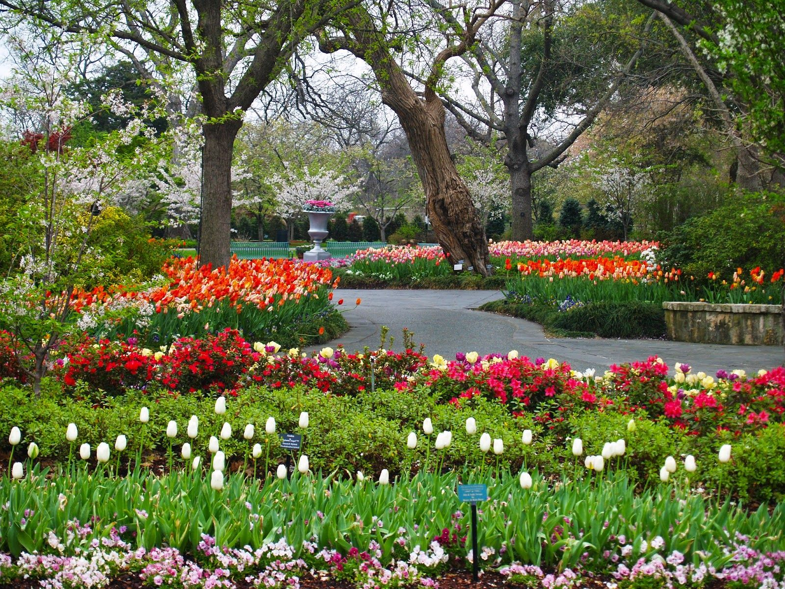 the french tangerine | flower garden | pinterest | dallas and gardens