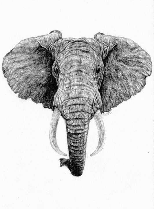 Realistic Elephant Face Drawing : realistic, elephant, drawing, African, Elephant, Kelysea, DeviantART, Tattoo,, Drawing,, Tattoo, Design
