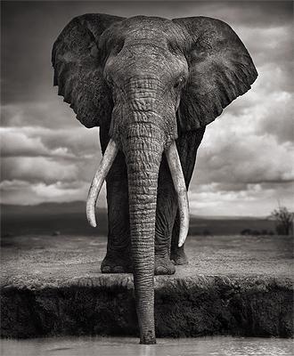 die besten 25 wildlife fotografie ideen auf pinterest