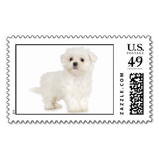 Maltese Stamp (LARGE) We have the best promotion for you and if you are interested in the related item or need more information reviews from the x customer who are own of them before please follow the link to see fully reviewsDiscount Deals          Maltese Stamp (LARGE) lowest price...