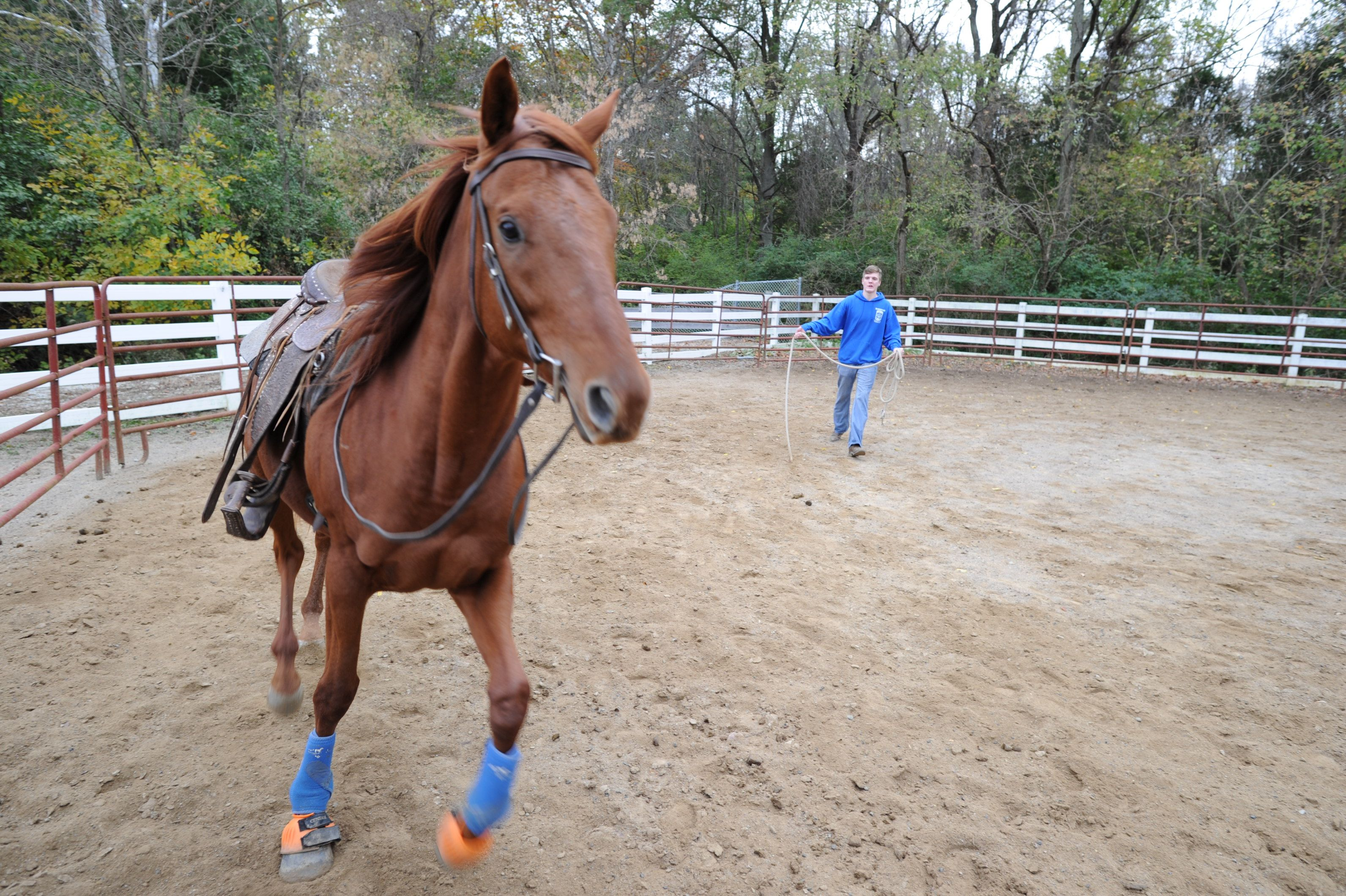 Great Oaks Equine Science Management For High School Students Learn To Develop Riding Techniques Practice T Oaks Student Learning High School Students