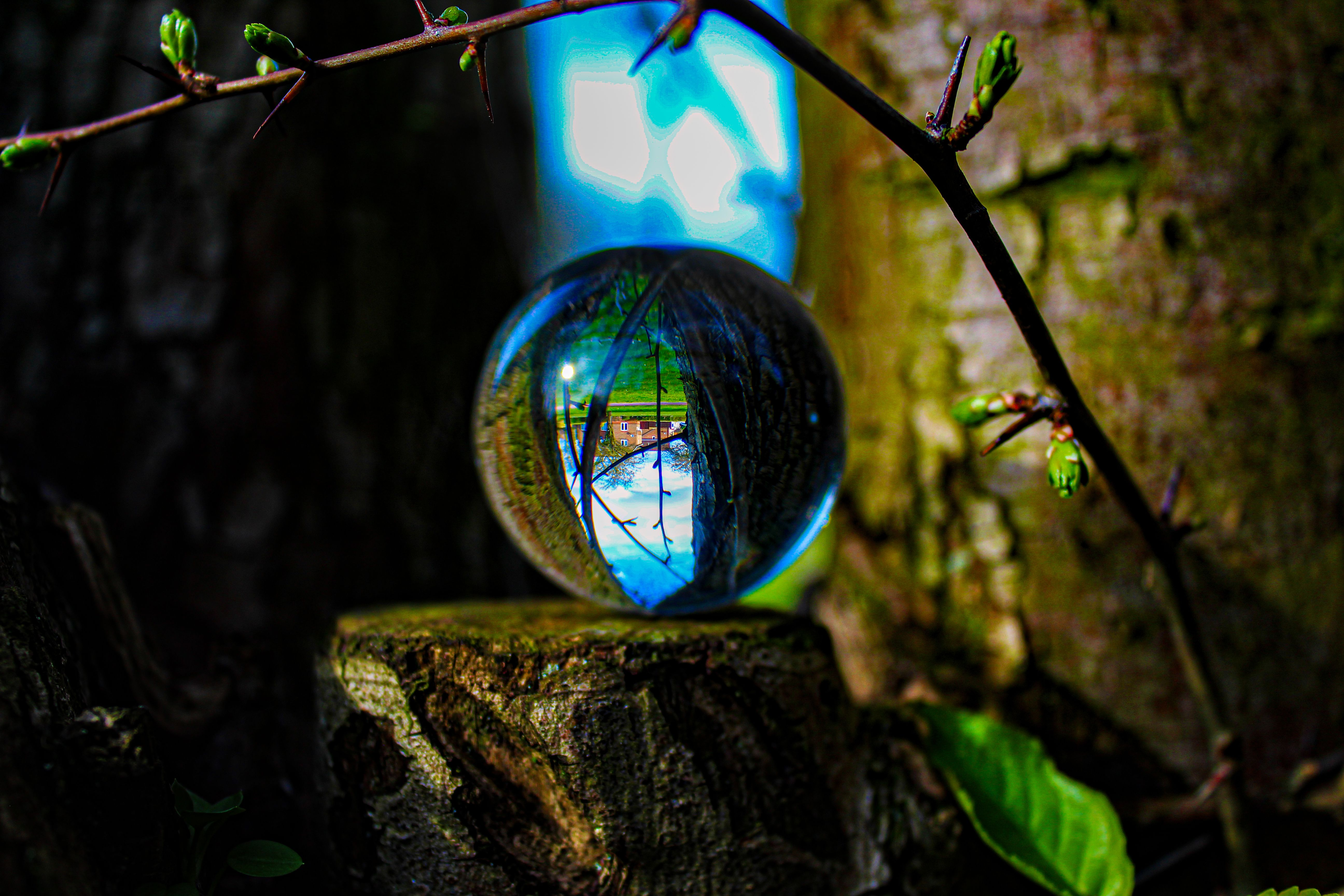 Had so much fun shooting through one of these. I recommend photographers buying this if you want to try new things  #photography #naturephotography #nature #crystalball #perspective #adventure #tree #park