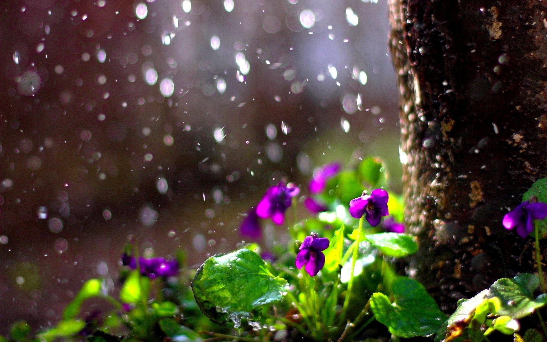 Spring Rain Wallpapers Background For Hd Wallpaper Desktop 1920x1200 Px 399 99 Kb Spring Flowers Background Rain Wallpapers Bokeh Wallpaper