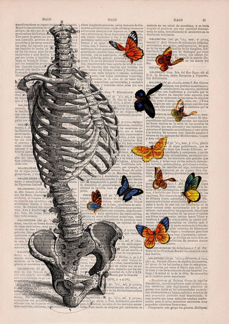 Floral Anatomy – Beautiful poetic illustrations on old book pages ...