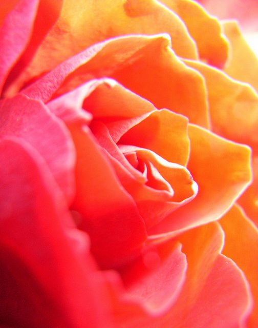 71365 sunny overexposure orange pink flowers and beautiful things every time you smile at someone it is an action of love a gift to that person a beautiful thing mother theresa sarahlabu flickr mightylinksfo