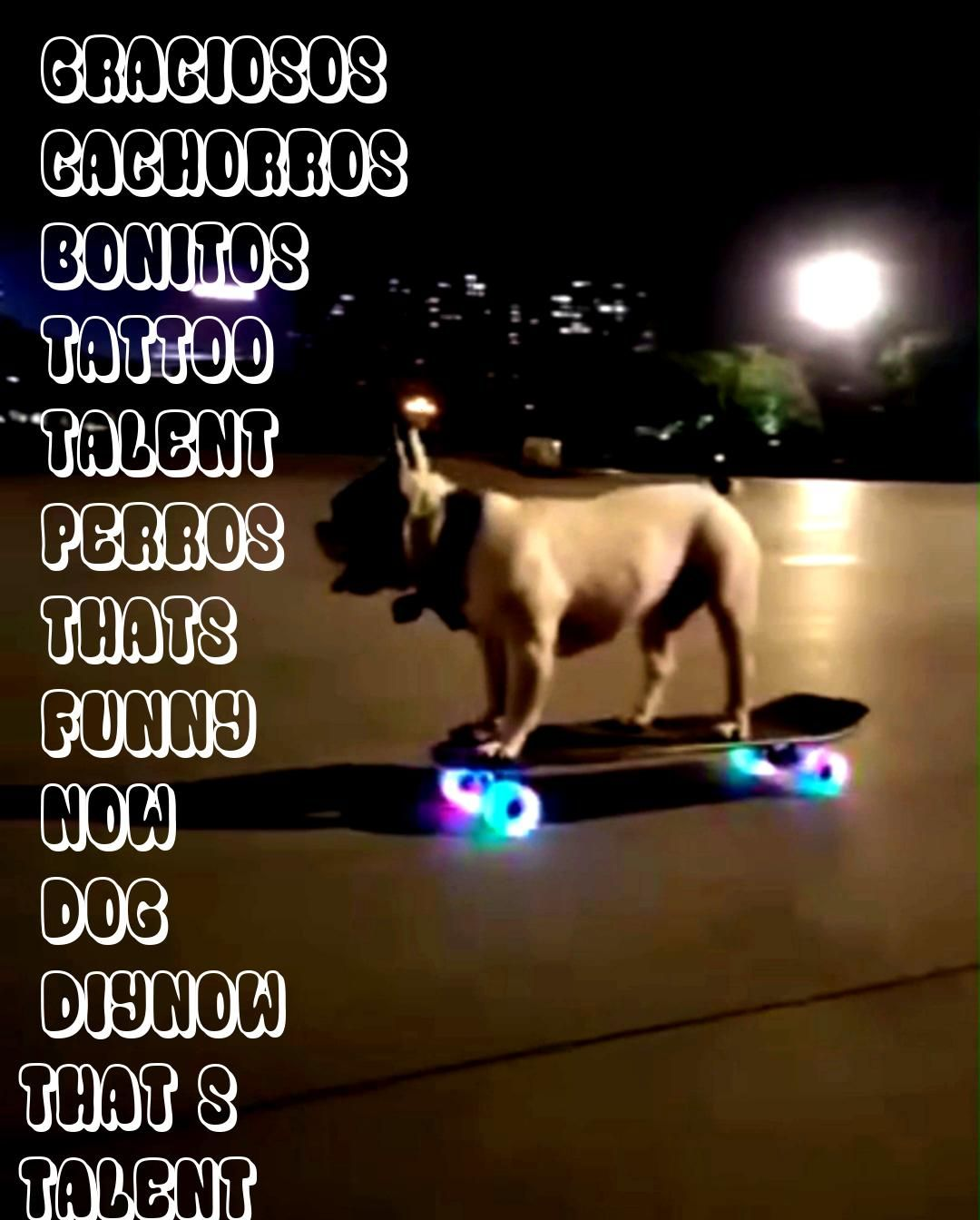 thats talent  diy funny tattoo bonitos cachorros graciososNow thats talent  diy funny tattoo bonitos cachorros graciosos Dog clothes cat pet supplies pet riding equipment...