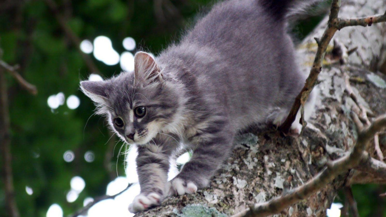 Wilde katzen, Katzenbabys, Niedliche tierbabys