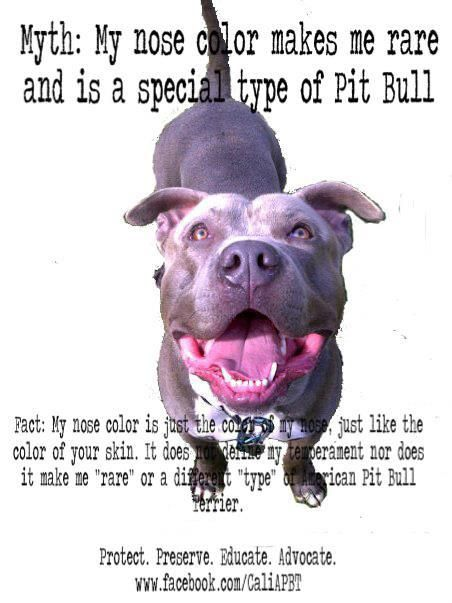 Blue Nose Myth Pitbulls Pitbull Facts Bully Breeds Dogs