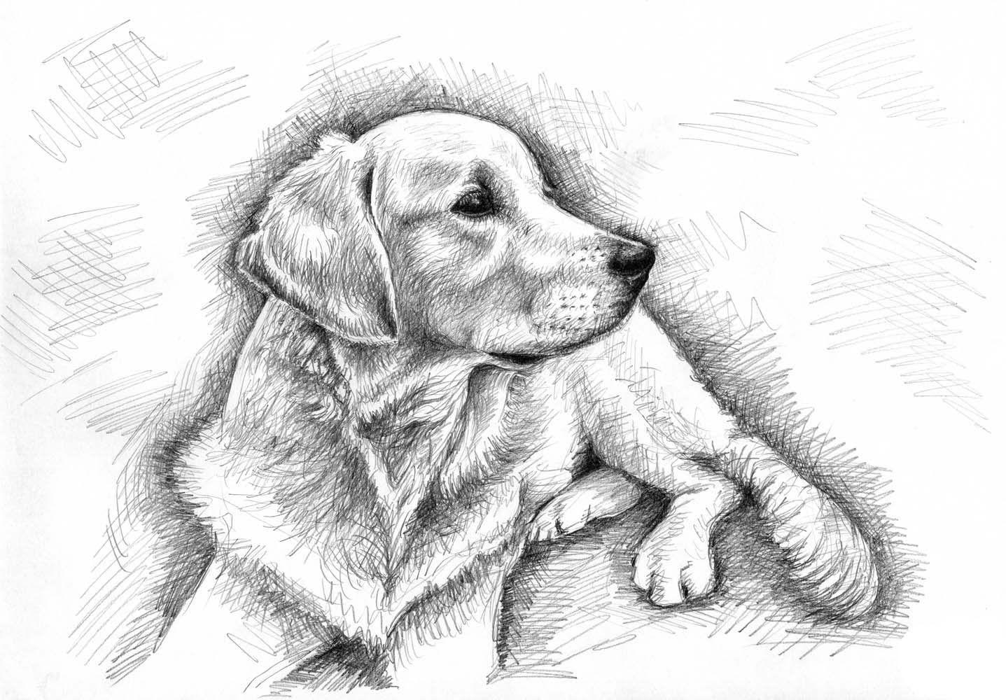tiere zeichnen mit grafit bleistiftzeichnungen  tiere