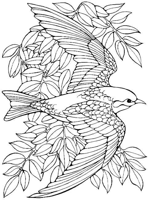 Printable advanced bird coloring pages for adults free for Bird coloring pages to print