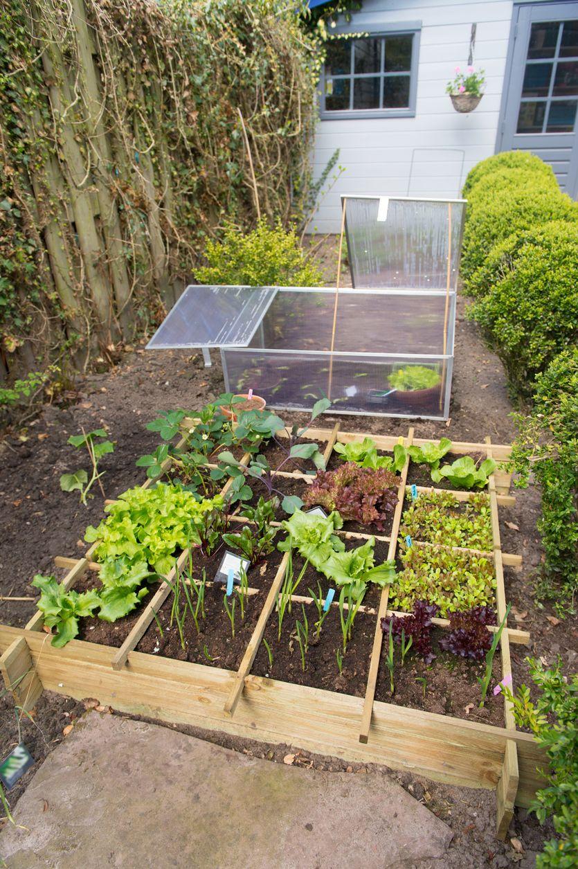 8 Erreurs A Eviter Au Potager Carre Faire Un Potager Jardinage En Carres Potager