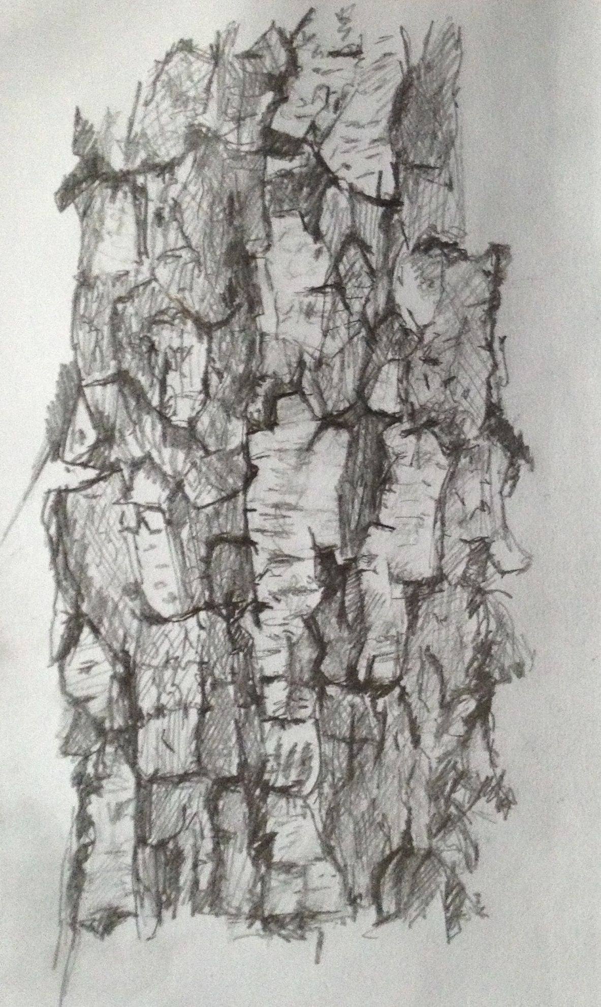 Birch tree - pencil drawing May 2013 By Jeremy Bevan   Learn ...