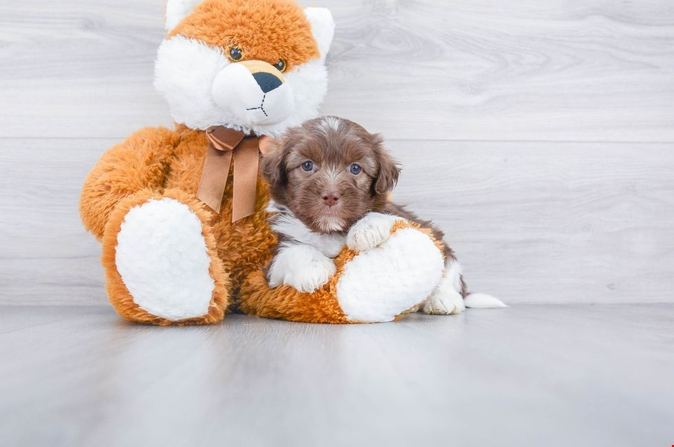 Happinesssss Minipet Online Pet Boutique Is A Melbourne Based For Small Dogs Cats And Their Human Guardian Cute Baby Animals Cute Animals Cute Dogs
