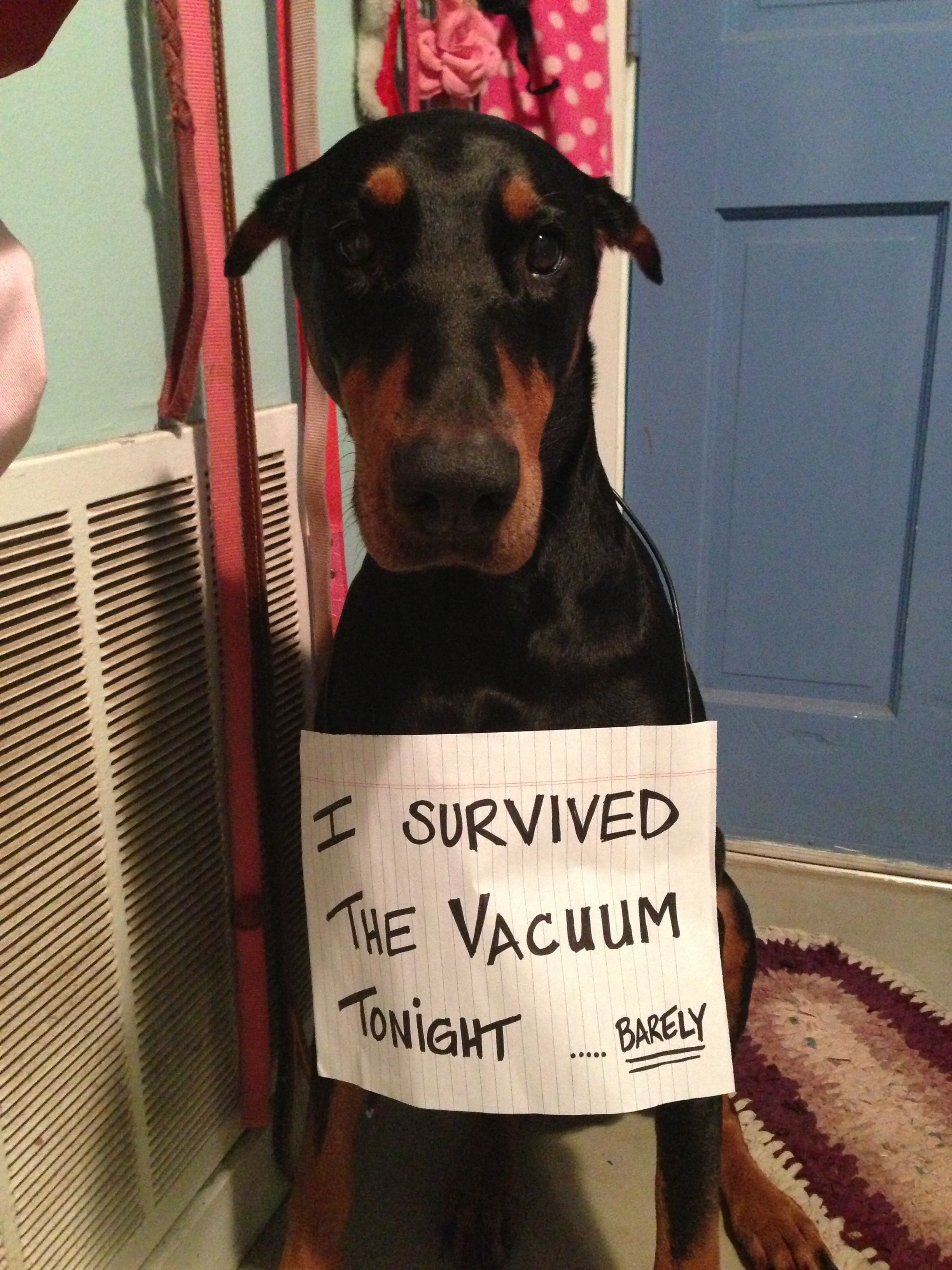 Pin By Suzanne S On Majestic And Loyal Doberman Doberman