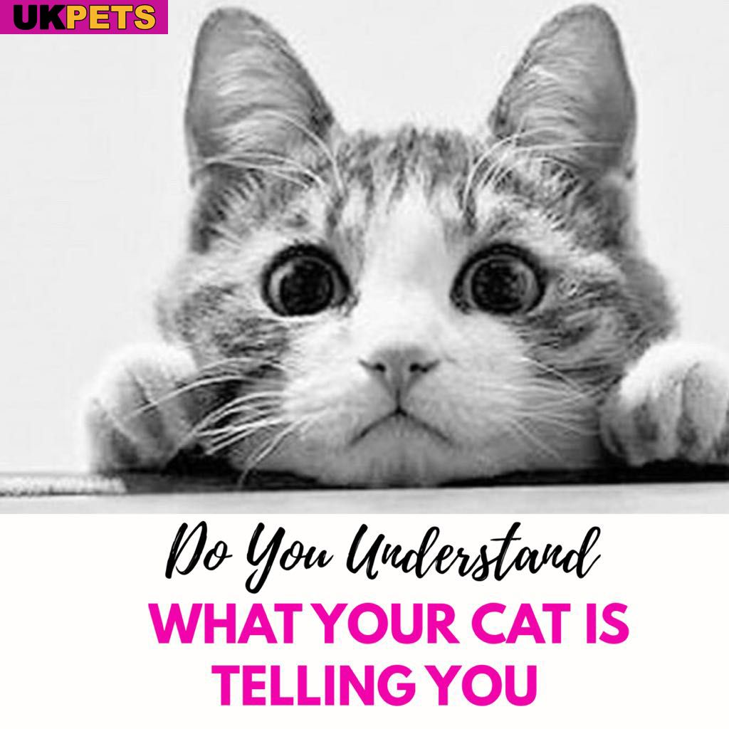 What Does Your Cat S Meow Mean Cat Meow Meaning Cat Lover