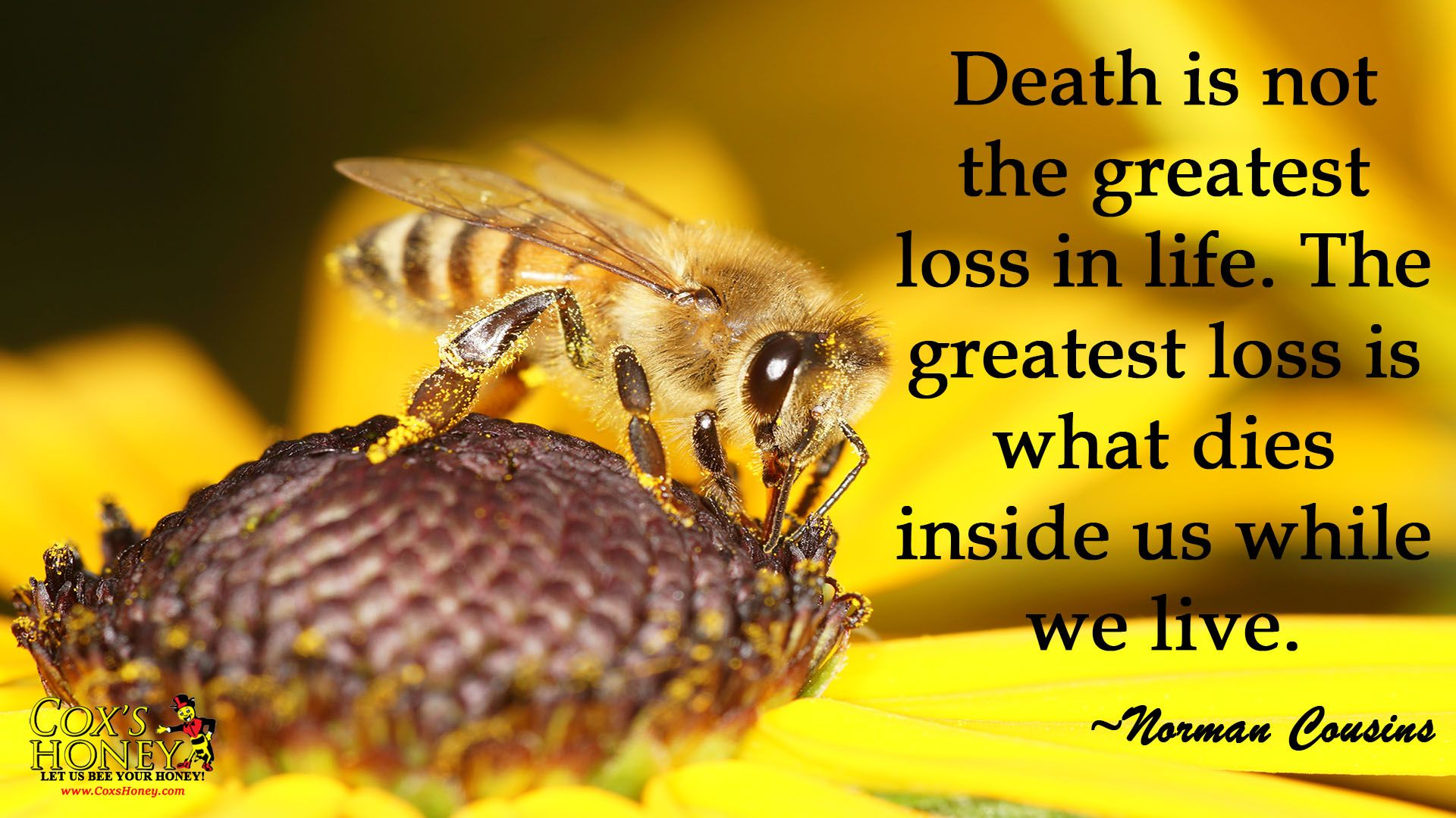 Quotes January Quote Of The Week For January 30 2017Death Is Not The Greatest