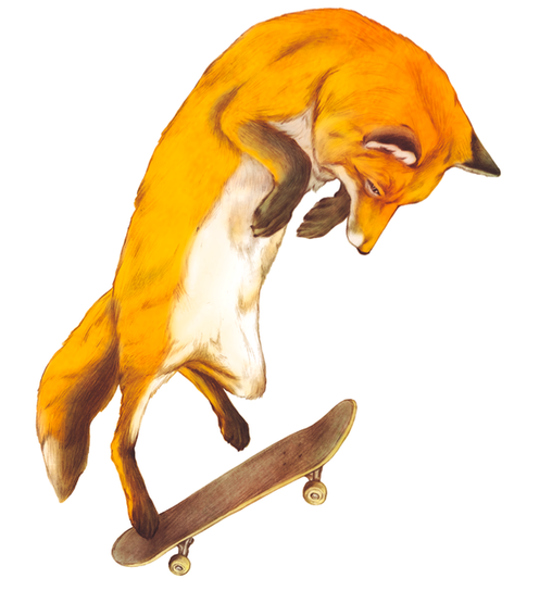Skateboard Animals By Giuse Modica Jody Boszor Fox Illustration Fox Drawing Skateboard Art