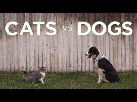▶ Cats vs Dogs - Freshpet - YouTube