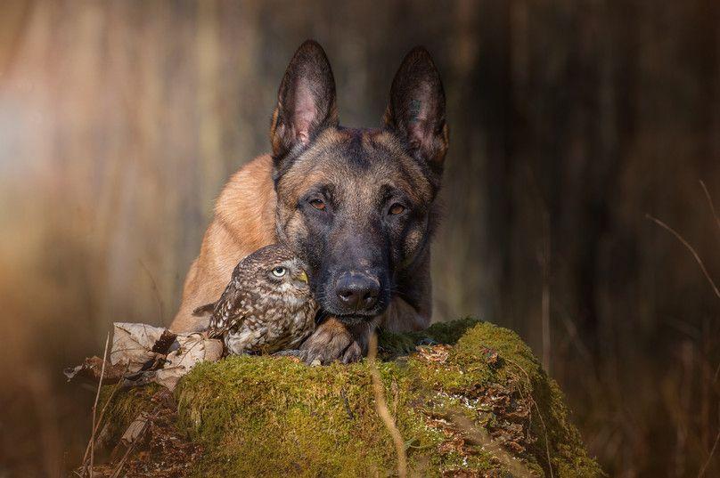 http://www.ingoundelse.de/jagd-und-hund/ Owl and dog -friends!!