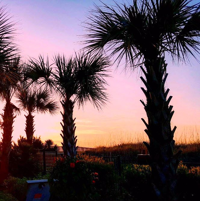 Palm Trees And The Ocean Breeze Is A Magical Way To Start Your Day Myrtle Beach Sc Vacation Destination Sunrise Photo Via Ig Mdcjr123